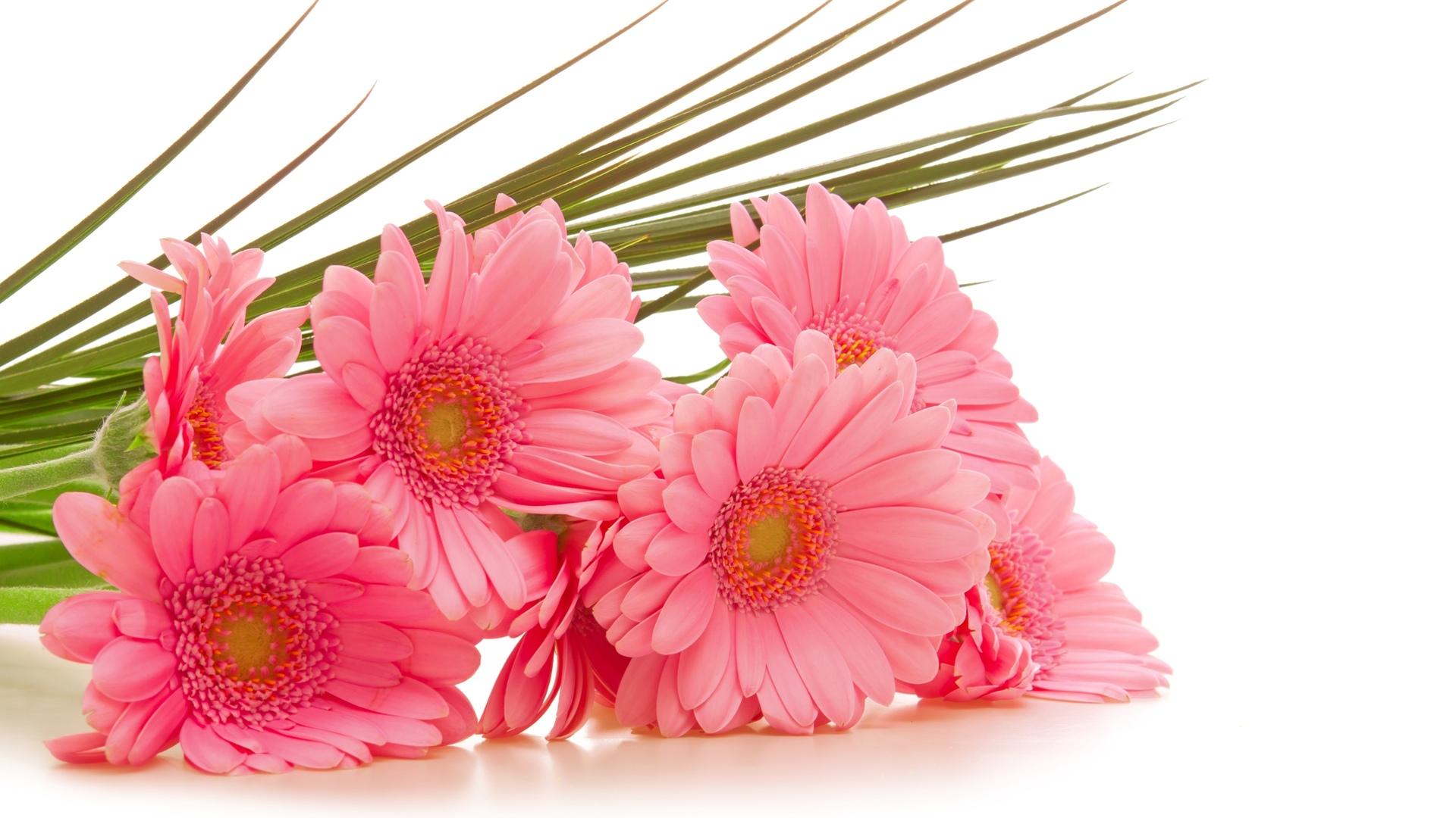 Цветы без фона